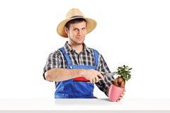 Męska ogrodniczka żyłuje rośliny Zdjęcie Royalty Free