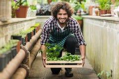 Męska ogrodniczka utrzymuje rośliny skrzynkę na floo Obrazy Stock
