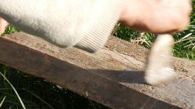 Męska ręka maluje powierzchnię drewniana deska z budowy muśnięciem i szarość malują zbiory wideo