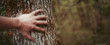 Męska ręka, muśnięcie, na drzewie zamkniętym w górę zdjęcia stock