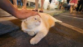 Męska ręka Muska Ogromnego Grubego Puszystego japończyka Kawaii kota przy nocy Targową ulicą w Phuket miasteczku 4K Tajlandia zdjęcie wideo