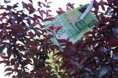 Męska ręka trzyma nowych Rosyjskich banknoty Dwieście rubli na tło czerwieni drzewie zdjęcia royalty free