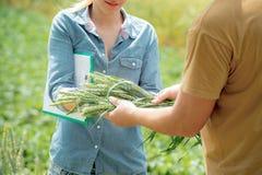 Męski i żeński agronom negocjuje o przyszłościowej uprawie whea Obraz Royalty Free