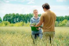 Męski i żeński agronom spotkania przy żyta polem t i Obraz Stock