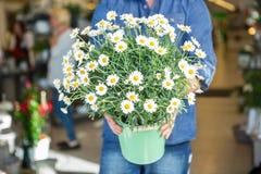 Męski klient Trzyma Kwiatonośne rośliny W sklepie Fotografia Stock