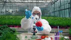 Męski naukowiec chemically nawozi warzywa zbiory