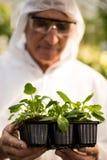 Męski naukowiec egzamininuje rośliny w czystym kostiumu Fotografia Royalty Free