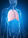 Męski płuco ilustracja wektor