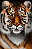 męski portret profilu tygrysa gapienia się Zdjęcie Royalty Free