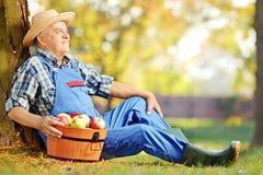 Męski pracownik siedzi w orchar w dungarees z koszem jabłka Zdjęcia Stock
