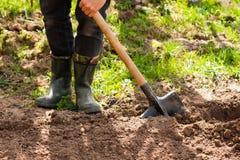 Męski rolnik W Gumowych butach Z łopatą I grulami W ziemi Ja Zdjęcie Royalty Free