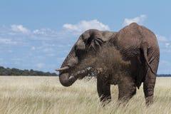 Męski słoń przy borowinową dziurą, Etosha park narodowy Zdjęcia Royalty Free