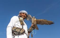 Męski saker jastrząbek podczas sokolnictwo lota przedstawienia w Dubaj, UAE Obrazy Royalty Free