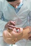 Męski stomatologiczny uczeń ćwiczy na lali Obraz Stock