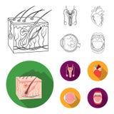 Męski system, serce, gałka oczna, oralny zagłębienie Organ ustawiać inkasowe ikony w konturze, mieszkanie symbolu stylowy wektoro royalty ilustracja