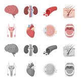 Męski system, serce, gałka oczna, oralny zagłębienie Organ ustawiać inkasowe ikony w kreskówce, monochromu symbolu stylowy wektor ilustracji