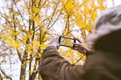 Męski turystyczny mienia smartphone bierze fotografię ginkgo liść w a Obrazy Royalty Free