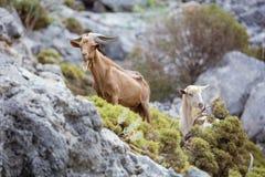 Męskie i żeńskie kózki w górach na wybrzeżu Zdjęcie Royalty Free