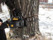 Męskie ręki w czarnych rękawiczkach trzymają piłę łańcuchową która zrobił dwa cięciom na gęstym drewnianym bagażniku w zimie w ws zdjęcia royalty free