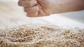 Męskie rolnik ręki dolewania zboża lub słodu adra zdjęcie wideo