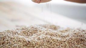 Męskie rolnik ręki dolewania zboża lub słodu adra zbiory