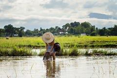 Młoda agriculturist łapania ryba Zdjęcia Royalty Free
