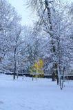 Młoda brzoza wśród starych drzew Fotografia Stock