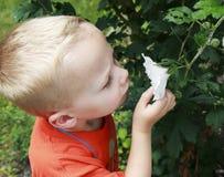 Młoda chłopiec wącha kwiatu Obraz Royalty Free
