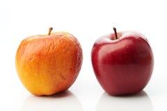 Młoda czerwień i starzy żółci jabłka zdjęcia royalty free