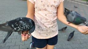 Młoda dziewczyna żywieniowi gołębie słonecznikowi ziarna z rękami na ulicie w mieście zdjęcie wideo