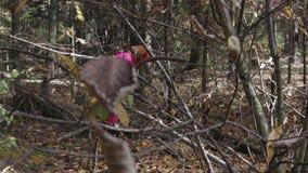 Młoda dziewczyna chodzi przez lasu i zbiera pieczarki zbiory