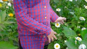 Młoda dziewczyna dotyka białych chamomile kwiaty i zieloną trawy z ręka słonecznym dniem plenerowym zdjęcie wideo