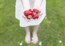 Młoda dziewczyna pokazuje ona ręki truskawki pełno Fotografia Royalty Free