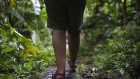 Młoda dziewczyna w dżungli zbiory