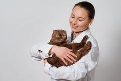 Młoda dziewczyna weterynarz w pracujących ubraniach z śmiesznym kotem w ona ręki na lekkim tle zdjęcie stock