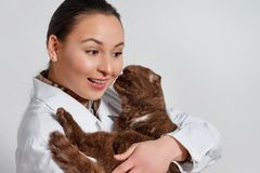 Młoda dziewczyna weterynarz w pracujących ubraniach z śmiesznym kotem w ona ręki na lekkim tle zdjęcia stock