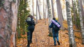Młoda kędzierzawa kobieta i chłopiec na scandinavian spacerze w lesie Iść ciężki zbiory wideo