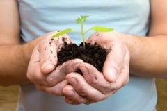 Młoda roślina w rękach Fotografia Royalty Free