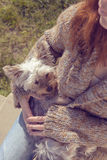 Młoda kobieta ściska jej Yorkshire teriera szczeniaka psa w jej podołku i cuddling Obraz Stock