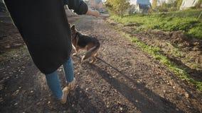 Młoda kobieta bawić się z dużym psem outdoors przy parkiem, kobiet sztuki ludzcy ` s zwierzęta domowe z dużą bacą, bawić się z ps zdjęcie wideo
