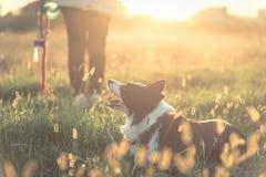 Młoda kobieta bawić się z jej Border collie psem zdjęcia royalty free