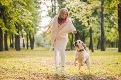 Młoda kobieta bawić się z jej psim labradorem w parku w spadku Rzuca kij pies zdjęcie royalty free