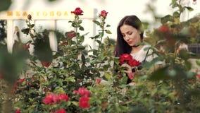 Młoda kobieta cieszy się odór piękne róże w miasta flowerbed W tło dziewczynach Stella z imieniem zbiory wideo