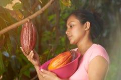 Młoda kobieta czeka i spojrzenia cacao strąk obraz stock