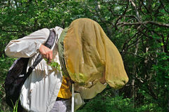 Młoda kobieta entomolog 15 Obraz Stock