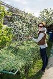 Młoda kobieta grzebie siano z świntuchem przy ogródem, rolnictwa wor Obrazy Royalty Free