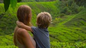 Młoda kobieta i jej syna odwiedzać średniogórze herbaciane plantacje Świeży, herbaciany pojęcie, zbiory wideo