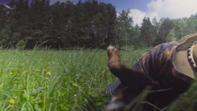 Młoda kobieta i psi bieg na polu zbiory