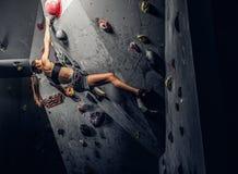 Młoda kobieta jest ubranym sportswear ćwiczy pięcie na ścianie indoors fotografia royalty free