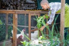 Młoda kobieta karmi ona bezpłatnych pasmo kurczaki Jajeczne kłaść karmazynki i młody żeński rolnik target1440_1_ zdrowy organiczn zdjęcie royalty free